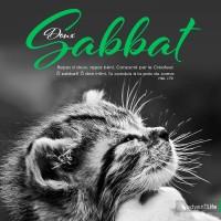 bon-sabbat-chattons